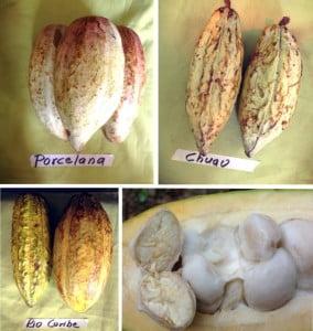 cacaos-criollos