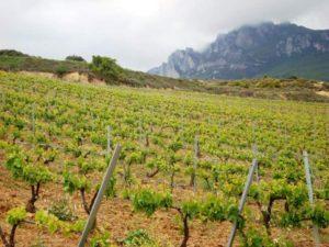Viñedos Bodegas Luis Alegre en la Rioja Alavesa
