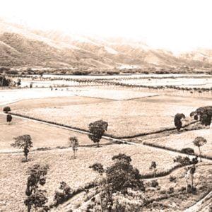 Hacienda Santa Teresa 1960