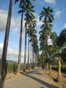 hacienda-santa-teresa-rutas-golosas